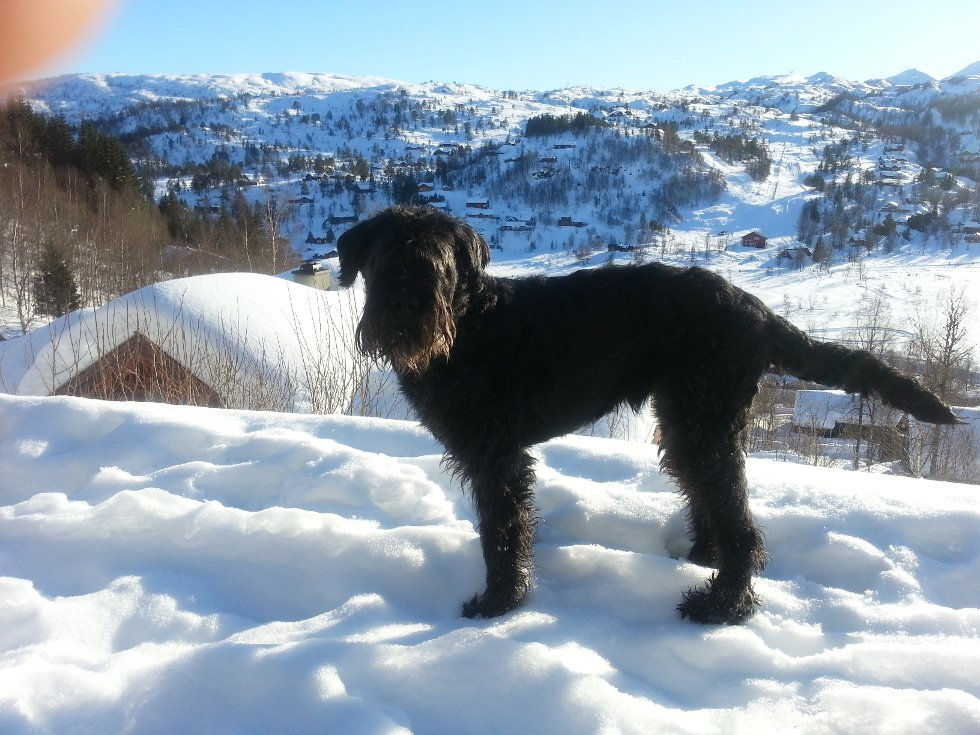 Obelix vinterferie på Kvamskogen. (Foto: Jan Erik Oppedal)