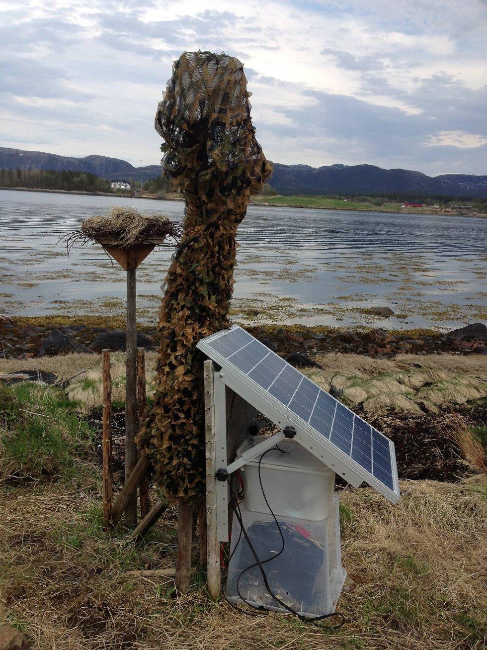 SOLDREVET: Et solcellepanel holder liv i direkteoverføringen fra web-kameraet.