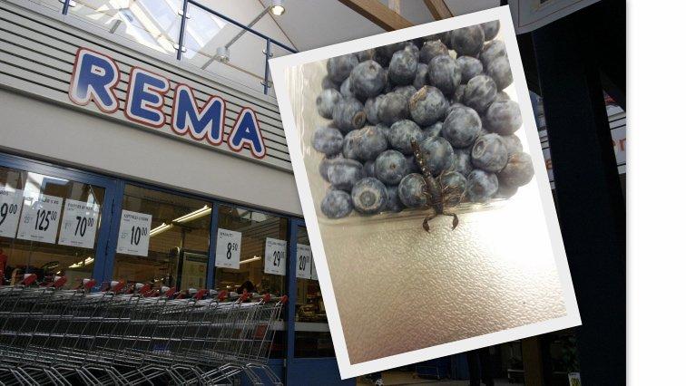 FANT DYR I BLÅBÆRESKE. Ole Johnny Melgård gikk til innjøp av en eske med blåbær på Rema 1000 i Odda. Der fant han et lite krypdyr som kan minne om en skorpion. - Det skal ikke skje og er et avvik og brudd på kvalitetskontrollen. Den har nok kommet inn under høsting eller pakking i Chile, sier produksjonssjef i Bama Gruppen AS, Henrik Raastad-Hoel.