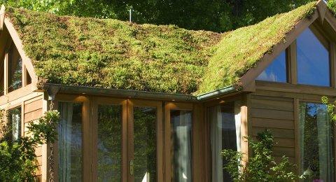 Moderne hus med sedumtak kan om noen år bli et vanligere syn enn det er i dag.