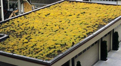 Sedumtak er det mest brukte av grønne tak på boliger, næringsbygg og garasje.
