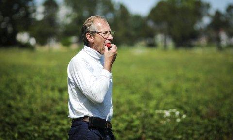 TOPP SMAK, MEN: Jordbærbonde Hans Julius Sanne lar store mengder fine jordbær henge og råtne fordi butikkjedene ikke vil ha dem og fordi det blir for dyrt å plukke dem. Alle foto: Sindre Grading