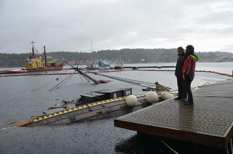 Leder i Båtlaget Gaia, Odd Sverre Kolstad (t.v.) og mannen som oppdaget at det var noe galt, Hermod Styrmo, beskuet vikingskipkopien tirsdag morgen.