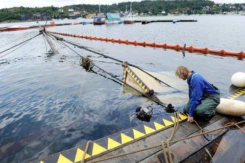 Vikingskipkopien Gaia sank i løpet av natt til tirsdag. Kvelden før skal noen ha sett uvedkommende om bord.