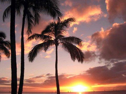 Palmesus. Emigrantene drømte om et tropisk paradis, men det var langt ifra bare palmesus.