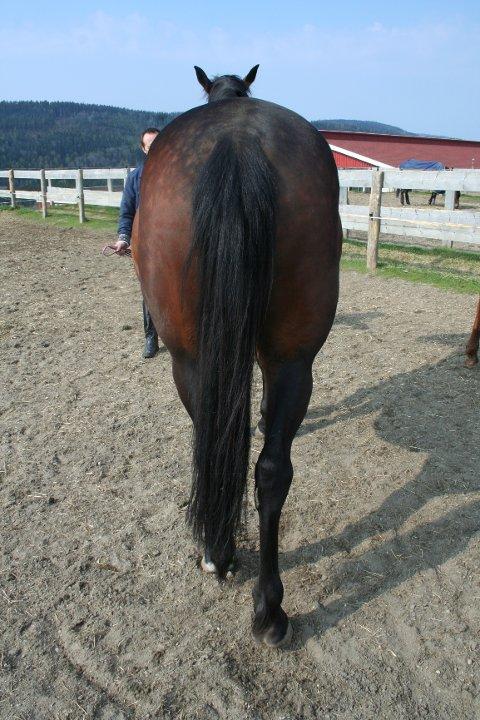 Hesten viste seg å ha en forkalkning i et ledd i et bakbein. Dermed endte ikke handelen bra for noen av partene.