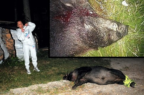 FOREVIGET: Grisen er død, men lever videre på mange bilder. Her fotograferer Evelyn Berg det store villsvinet.