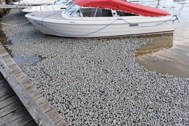 Slik så det ut i Ollebukta søndag kveld, før oppryddingen startet. Glass-skummet skal ifølge Per Svennar i Havnevesenet ikke være farlig for båtene.