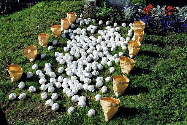 Flere besøkende til kirkegården på Orelund reagerte på disse hodeskallene som var lagt ut over en gravplass. Foto: Kristin Bjørntvedt