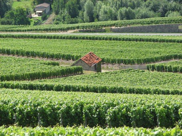 Distriktet Soave ligger i fylket Veneto, omtrent midtveis mellom Verona og Gardasjøen i Italia.