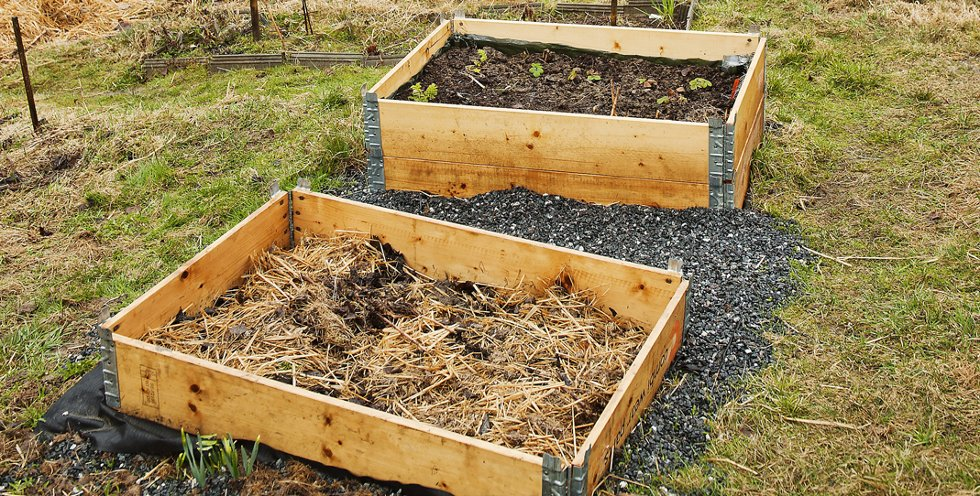 Pallekarmer blir rammer for pastinakk, jordskokk, squash og jordbær. Blant annet.