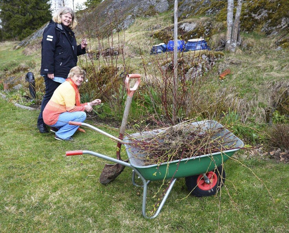 HAR KLART VINTEREN: Hanne Dølheim og Aase Winger sjekker rosene. Denne vinteren har vært mye mildere og snillere enn de to foregående. FOTO: KARI KLØVSTAD