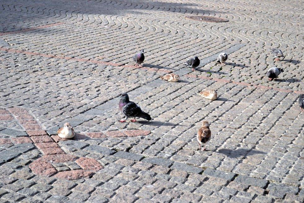 Her er noen av måkeungene som for tiden koser seg på Bragernes torg, mens foreldrene stupbomber forbipasserende.