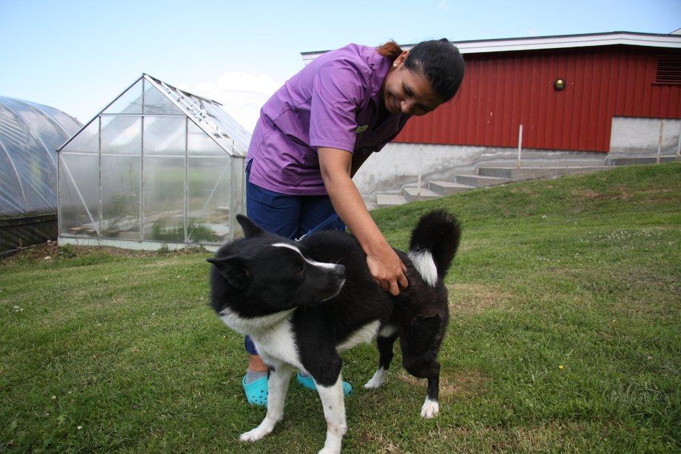 Denne løshunden venter på å bli hentet av eieren sin. I mens blir han passet på av blant annet dyrepleier Andrea Hangerhagen ved Jeløy Dyreklinikk.