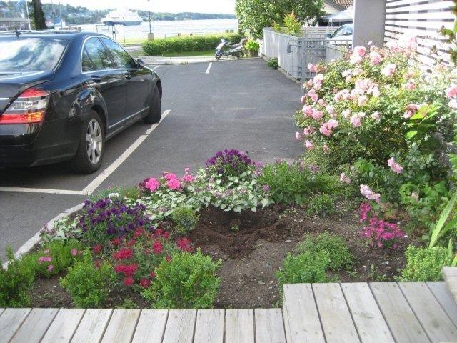 Noen har røsket med seg planten som stod i bedet langs Sjøgata natt til mandag. Beboerne er fortvilet.