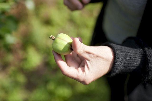 Ennå bare karten. Men når høsten kommer, henter Fiskum Fruktpresseri råvarer fra egen hage, i tillegg til å kjøpe seg litt ekstra.