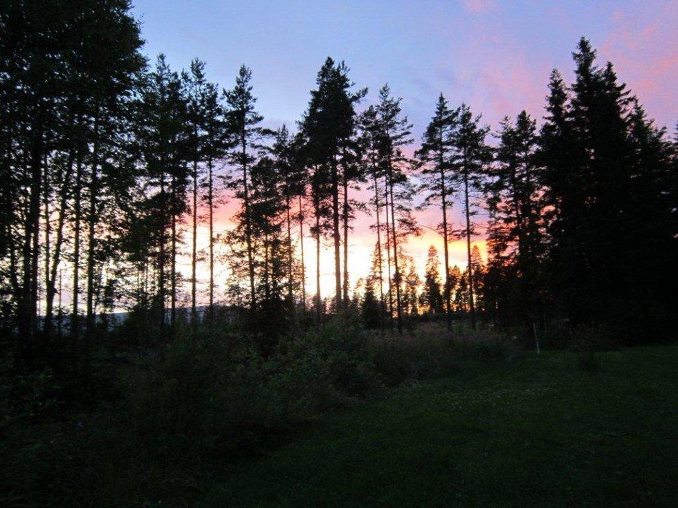 Solnedgang i skogen.
