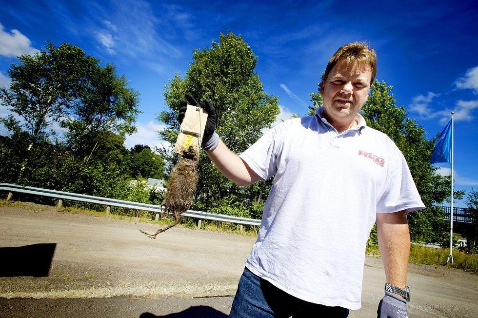 TAR ROTTA PÅ ROTTENE: Jan Arve Sakshaug ved skadedyrfirmaet Pelias har opplevd rekordmange henvendelser angående disse bustete sommergjestene. Foto: Peder Gjersøe