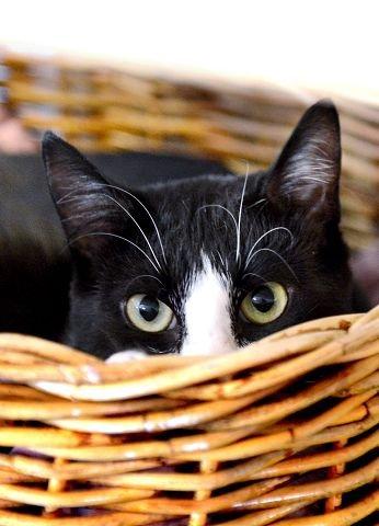 Jo mer kontaktsøkende kattene er, jo fortere finner de eiere.