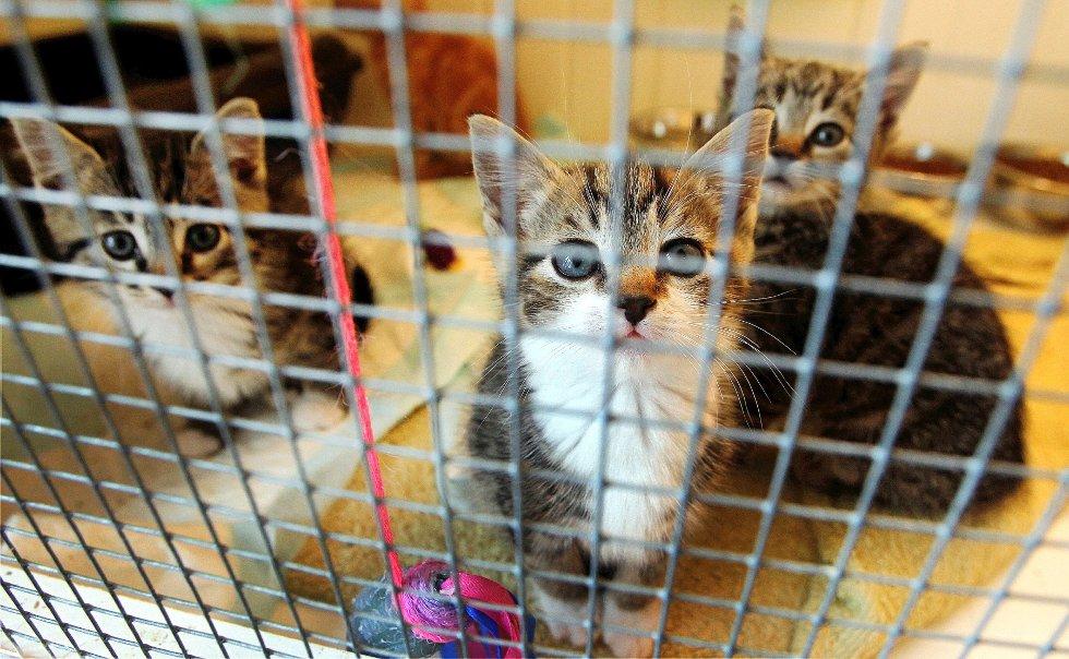 Dyrenes hus tok hånd om 40 kattunger bare i juli. Nå er mottaket helt fullt.