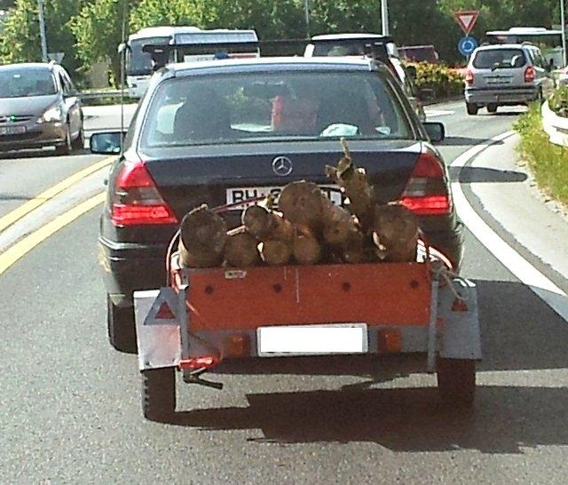 - Sjåføren hadde ikke lastestroppene med seg, da ble like greit startkablene tatt i bruk, opplyser tipser. (Foto: 2303-tipser)
