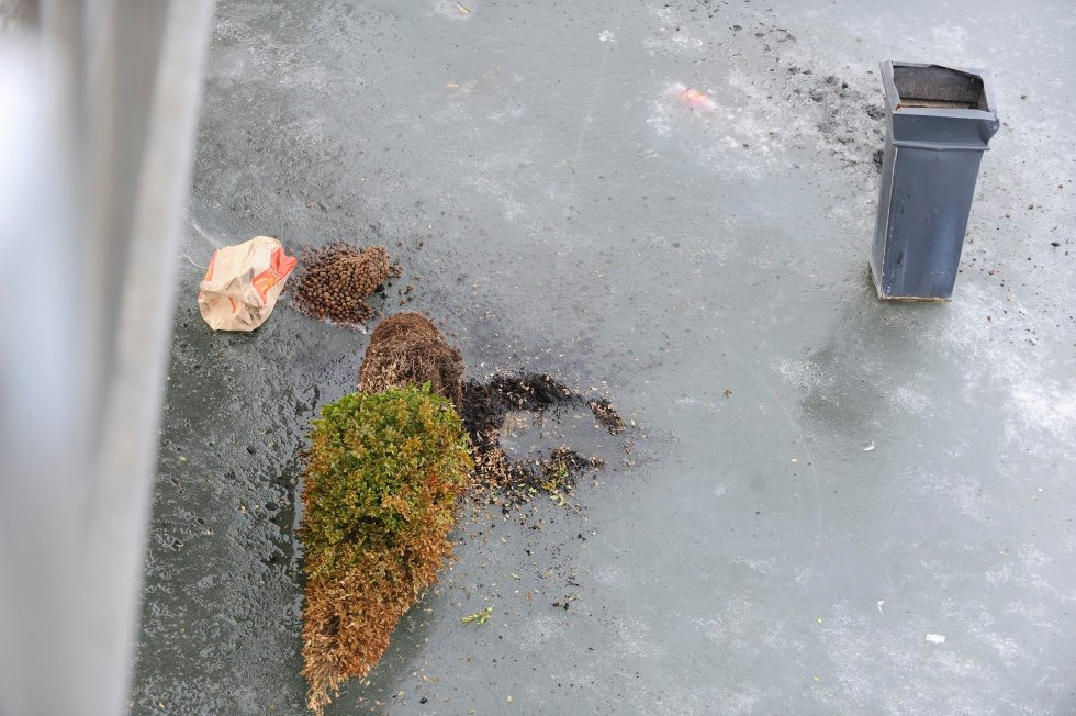 Planter ligger på isen under gangbrua.
