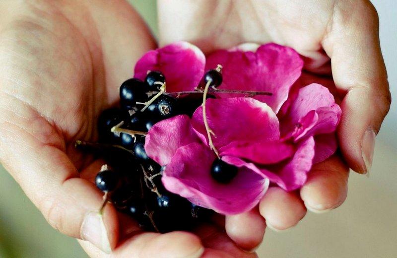 RÅVARER: Solbær og nypeblomster er to av ingrediensene du kan hente fra hagen til drammen.