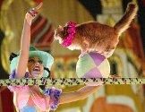 En kvinnelig dyretrener opptrer med katten sin under en sirkusforestilling i Kalkutta. Den russiske sirkustroppen er på turne i India.