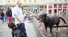 Rune Jacobsen, rottweileren Dolly (11 år) og den søramerikanske mastiffen Mac (7 måneder) demonstrerte for dyrepoliti.