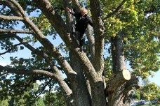 Anders Often har skrevet om Sogstieika, blant annet i serien Follominner, tok denne uka eika i nærmere ettersyn. - Opplevelsen treet gir oss er ikke foringet, mener biologen som varmt anbefaler å sikre stammene med vaier.
