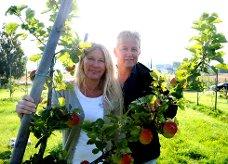 ? Gulleplet skal helt klart få hedersplassen hos Epleblomsten, sier Britt og Sveinung Sauar. Selve beviset får de på marknadsdagen under Norsk Eplefest på Gvarv 27. september.