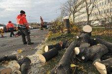 hugde trær