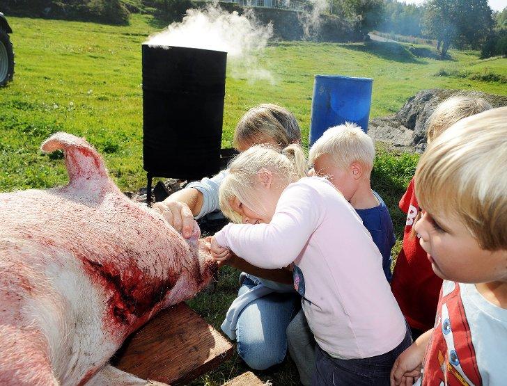 Tunge, tenner og den spesielle grisenesa blir studert nøye av Nora Victoria og Theodor.