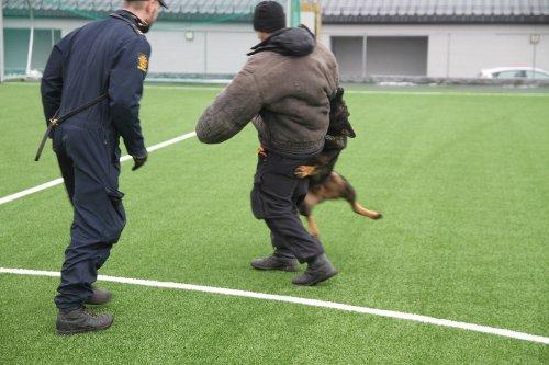 Politiets patruljehunder