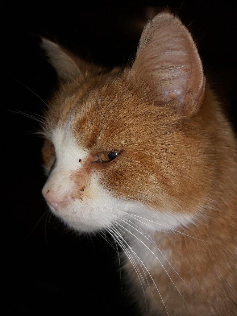 Snill: Matmor Laila Irene Mæhlum beskriver Pus som en snill katt. Hun savner han stort og håper alle kan holde et ekstra øye oppe i Mosjøen.