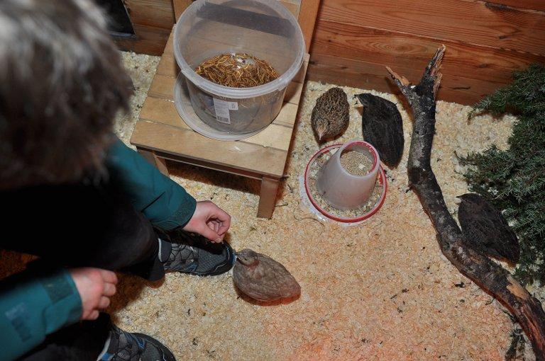 Snacks: Marius tilbringer mye tid sammen med sine nye fjærkledde venner - stell, kos og mating. Porøs og sprø melorm er namnam.