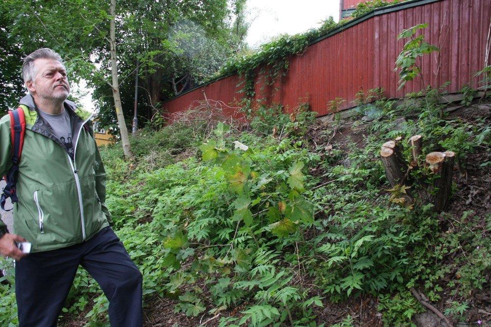 BU-leder Per Overrein reagerer på den ulovlige hogsten i Maridalsveien 113.
