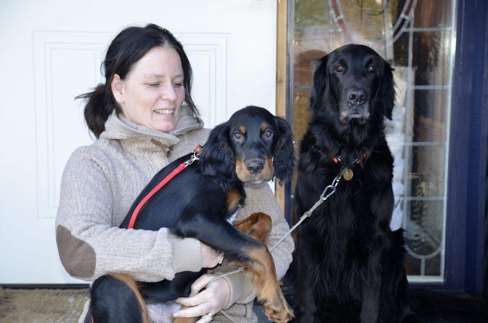 LYKKELIGE SAMMEN: Birgitte Hakstun (48) sammen med Gordon setteren Felix, som er 4 måneder og Flat coated retrieveren Scott, som er ni år. Hakstun er veldig glad for å ha hundene sine hjemme igjen. Nå er det bare bilen som må returnere til sin rette eier.
