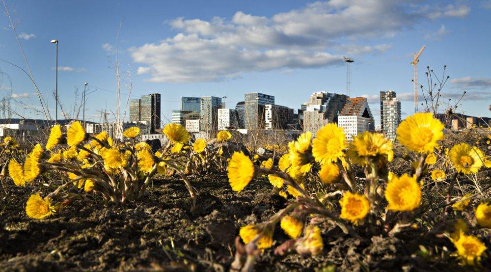 Byrådet las onsdag fram sin plan for hvordan Oslo skal utvikles mot 2030 da det anslås at hovedstaden vil telle om lag 800.000 mennesker.