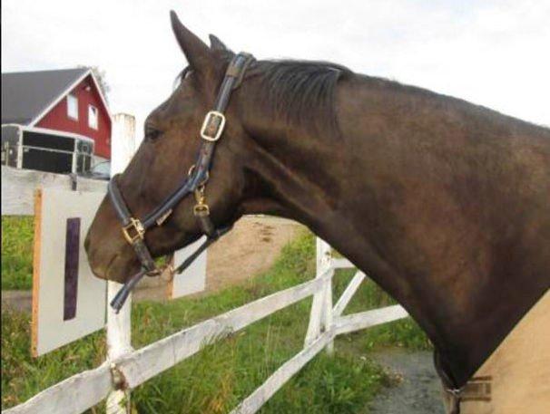 Tippe hest p? nett
