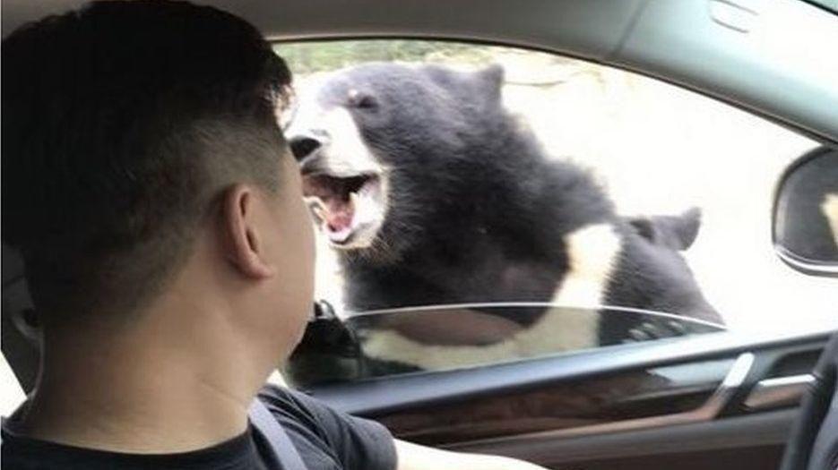 Her Blir Han Angrepet Av En Bjørn