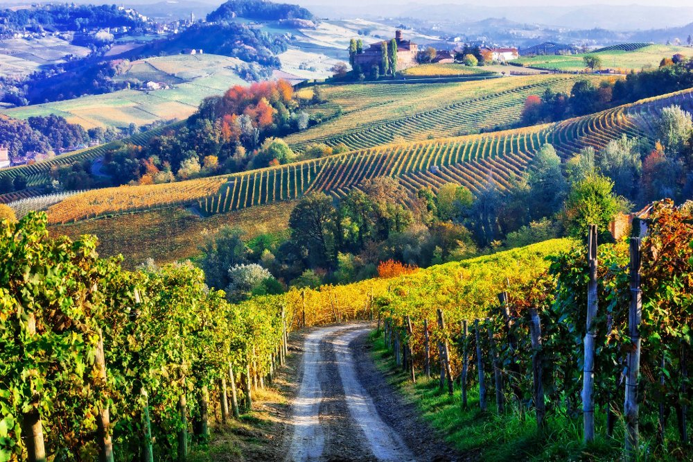 Vineyards and of Piemonte in autumn colors. North of Italy Vineyards of Italian countryside in autumn