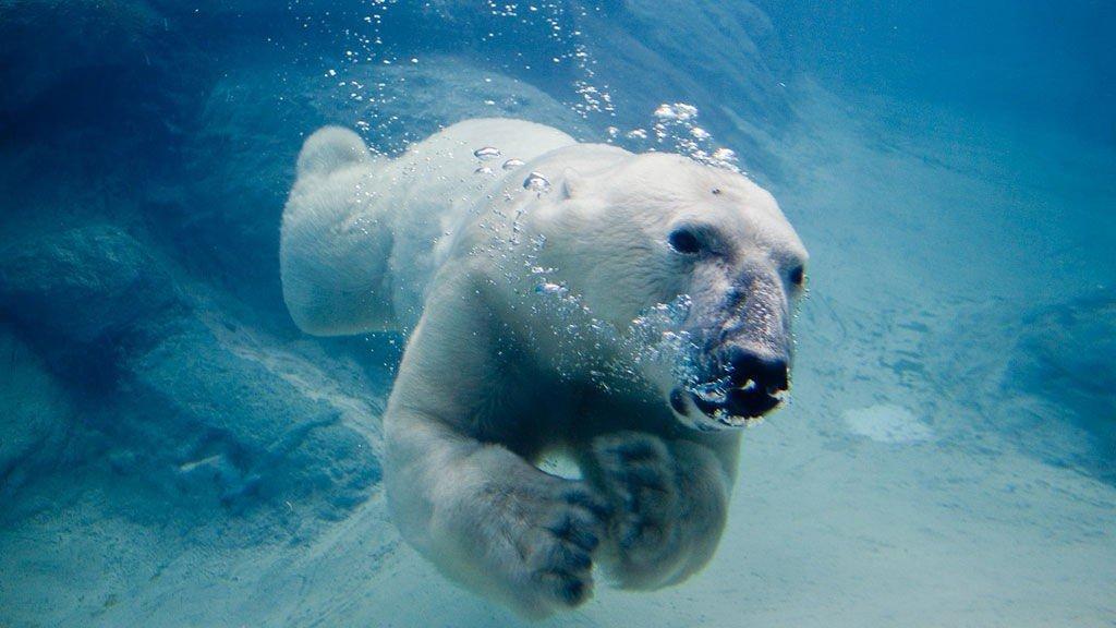 ARKTISK: Se spektakulært natur- og dyreliv på opplevelsescruise på Grønland.