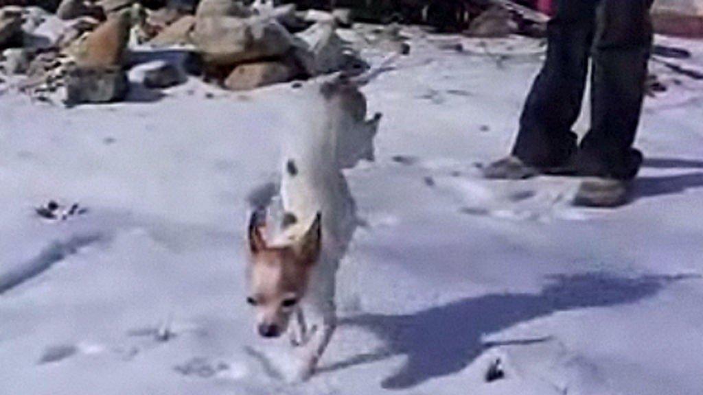 HVORFOR IKKE: Å gå på to bein har fungert utmerket for oss mennesker, hvorfor skal ikke hundene få lov?