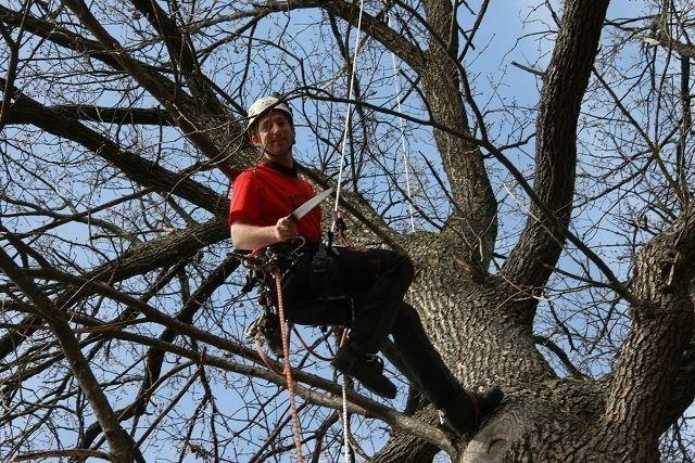 Høyt i toppen henger Joe Bevan, men ikke topp treet - ifølge tredoktoren fra Wales. Kristin Tufte Haga