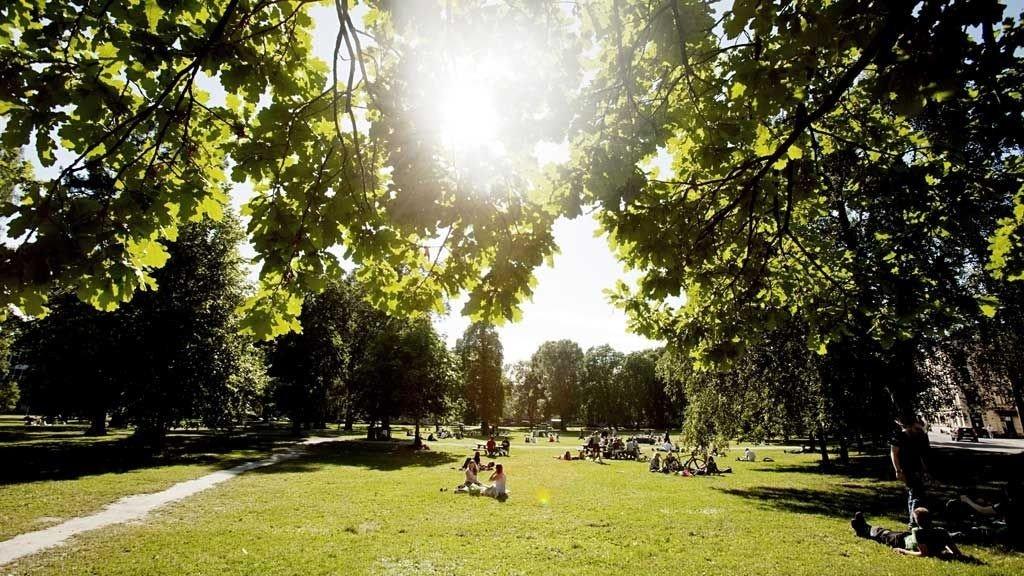 Sommer og sol i Sofienbergparken i Oslo.