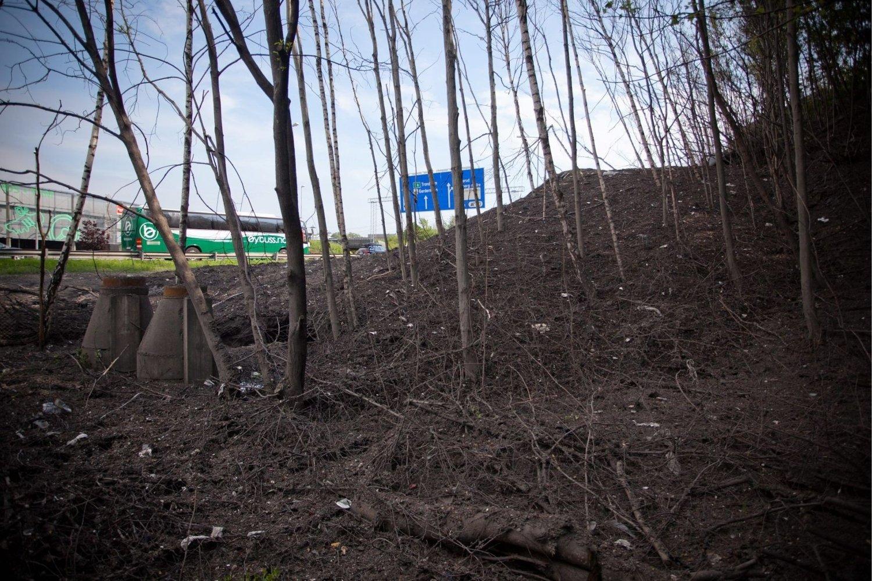 DØDT: Vinterens snødeponering fører til død vegetasjon. Nå skal EBY foreta en befaring for å vurdere tiltak.