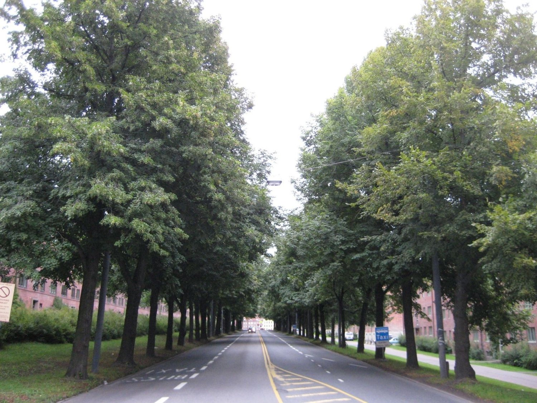 Langs Christian Michelsens gate inn mot Carl Berners plass troner denne trerekka. Den blir klassifisert som een av de to flotteste alleene i Oslo av Statens vegvesen.