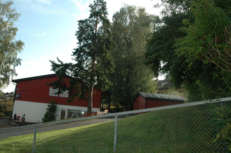 STRIDENS EPLE: Trærne inne i Lindebergskogen barnehage er viktig for barna som vil ha skygge. Mens naboene er villige til å gå rettens vei for å få dem ferjet.