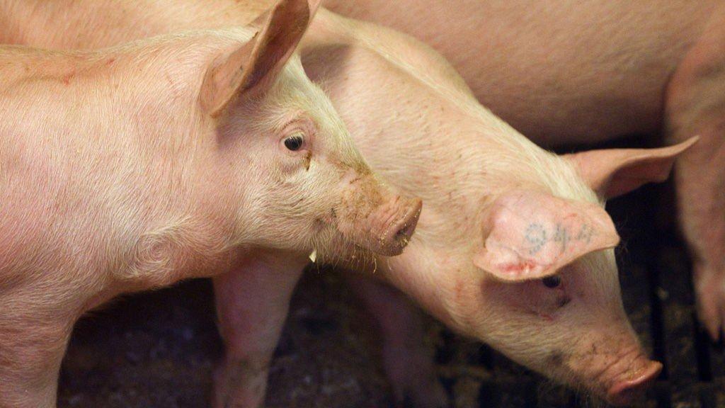 136 griser døde etter at den 31 år gamle vordende bonden ikke tok vare på dyrene.